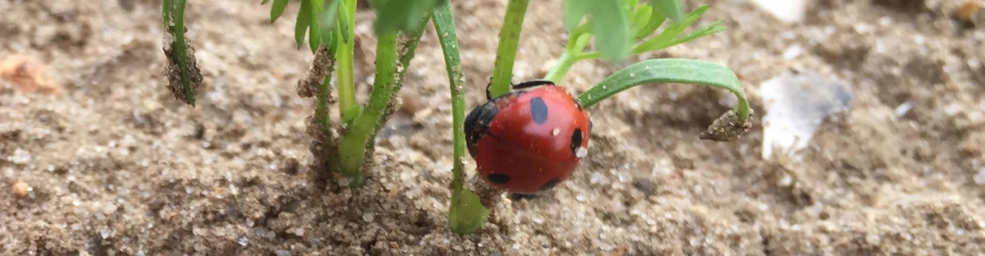 organic vegetable growers