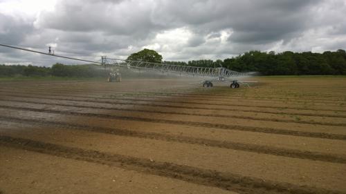 10 Irrigation carrots