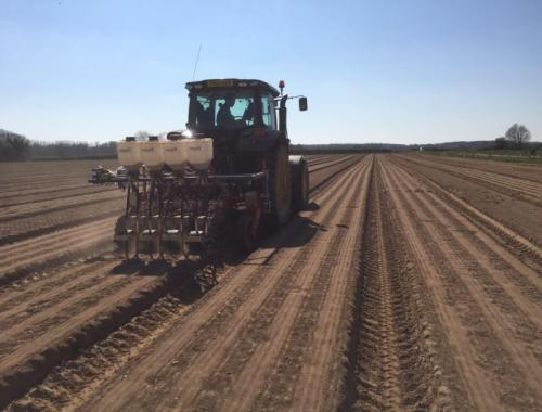 3 Carrot drilling