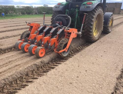4 Beetroot drilling